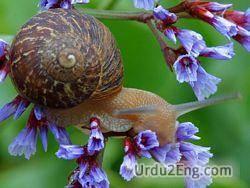 snail Urdu Meaning