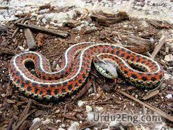 snake Urdu Meaning