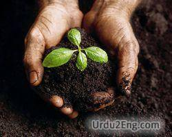 soil Urdu Meaning