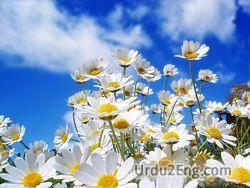 spring Urdu Meaning