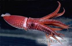 squid Urdu Meaning