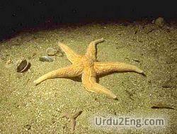 starfish Urdu Meaning