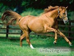 steed Urdu Meaning