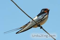 swallow Urdu Meaning