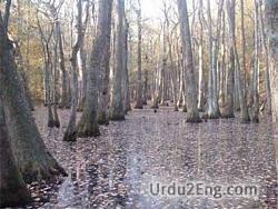 swamp Urdu Meaning