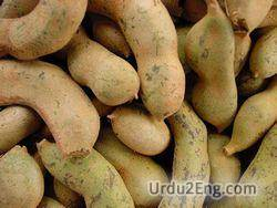 tamarind Urdu Meaning