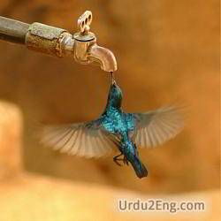 thirst Urdu Meaning