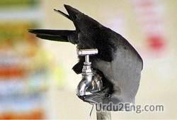 thirsty Urdu Meaning