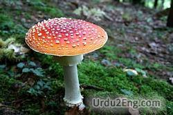 toadstool Urdu Meaning