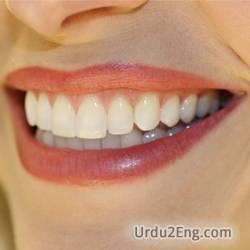 tooth Urdu Meaning