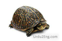 turtle Urdu Meaning
