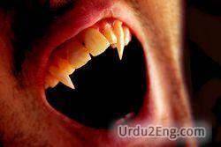 vampire Urdu Meaning