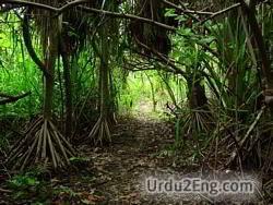 vegetation Urdu Meaning
