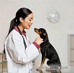 veterinarian Urdu Meaning