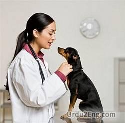 veterinary Urdu Meaning