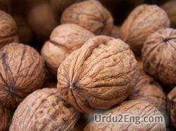 walnut Urdu Meaning