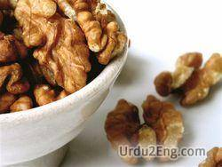 walnut Urdu Meaning