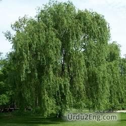 willow Urdu Meaning