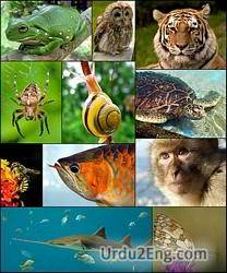 zoology Urdu Meaning